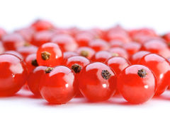 Studio shot of red currants Stock Images