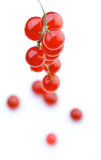 Studio shot of red currants Royalty Free Stock Photos