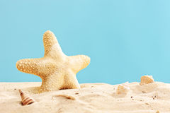 Studio shot of a starfish in sand Royalty Free Stock Image