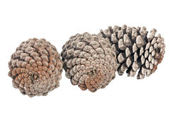 Studio Shot of Three  Aged Pine Cones Royalty Free Stock Photography