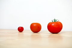 Studio Shot of three cherry tomatoes in a row Stock Photos