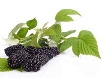 Studio shot of three fresh blackberries with leaves in background. Close up view of three fresh blackberries with leaves in background Stock Images