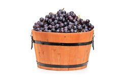 Studio shot of wine grape in a wooden barrel Royalty Free Stock Images