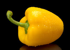 Studio shot of yellow bell pepper isolated on black with water d Stock Image