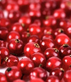 Studio soht of redcurrants - close-up Stock Image