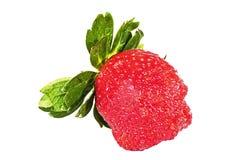 Studio som skjutas av den enkla nya organiska röda jordgubben Royaltyfri Fotografi