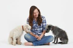 Studio sparato della donna con due cani del Lurcher dell'animale domestico immagine stock