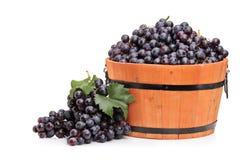 Studio strzał wina winogrono w drewnianej baryłce obraz stock