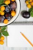 Studiofotografi av den destinerade anteckningsboken för öppen tom cirkel som omges av plommoner och blyertspenna för nya frukter  Royaltyfri Bild