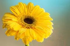 Studiofotografie van een natuurlijke bloem royalty-vrije stock fotografie