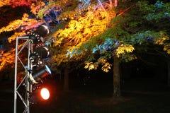Studiolichter in der Natur Stockbilder