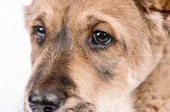 Studioportret van de hond op een grijze achtergrond royalty-vrije stock fotografie