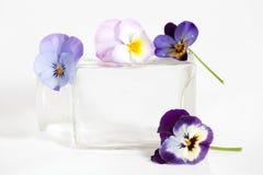 Studioschot van Blauwe Gekleurde Pansy Flower Stock Afbeelding