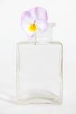 Studioschot van Blauwe Gekleurde Pansy Flower Royalty-vrije Stock Afbeelding