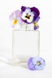 Studioschot van Blauwe Gekleurde Pansy Flower Stock Afbeeldingen