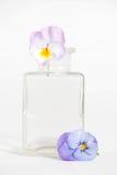 Studioschot van Blauwe Gekleurde Pansy Flower Royalty-vrije Stock Afbeeldingen