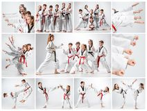 Studioskottet av gruppen av ungar som utbildar karatekampsporter arkivbilder