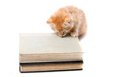Studious orange kitten Royalty Free Stock Photography
