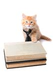 Studious orange kitten Royalty Free Stock Photo