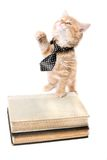 Studious orange kitten Stock Images