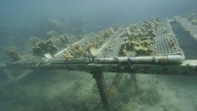 Studiowanie korale podwodni zbiory wideo