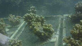Studiowanie korale podwodni zdjęcie wideo