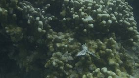 Studiowanie korale podwodni zbiory