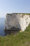 Studland Chalk Cliff Royalty Free Stock Photo