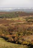Studland heathland Royalty Free Stock Image