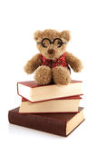 Study bear Stock Photos