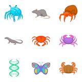 Study of fauna icons set, cartoon style. Study of fauna icons set. Cartoon set of 9 study of fauna vector icons for web isolated on white background Stock Photos