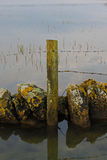 Study of fence with reflections in the water Royalty Free Stock Images
