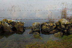 Study of fence with reflections in the water Stock Photo