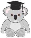 Study koala Stock Photo