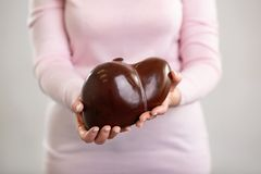 Human liver being in teachers hands. Study material. Human liver model being in professional teachers hands while showing it to you royalty free stock image