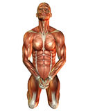 Study muscle man on his knees Stock Image