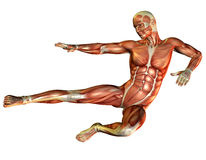 Study muscle man make the leap. 3D rendering of a muscle and motion study in men Stock Photography