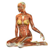 Study muscle woman sitting. 3D rendering of muscle of a seated woman Stock Photo