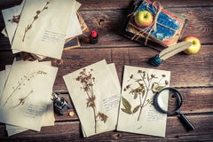 Free Study Of Plant At Biology Lesson Stock Images - 59069964