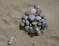 Study of pebbles on a beach, texture interest. Study of pebbles on sand, texture and background interest Royalty Free Stock Image