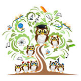Study the tree and cheerful owls Stock Image