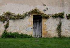 Study of wooden Doorway with vines. Stock Images
