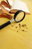 Studying Biology specimens. A photograph showing a magnifying glass on a brown wooden table used to examine some biological specimens of tropical rainforest tree stock photos