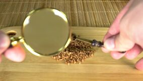 Studying buckwheat, fine grits under a magnifying glass on a board with a slowdown