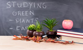 Studying green topics with nature objects in classroom environme Stock Photo