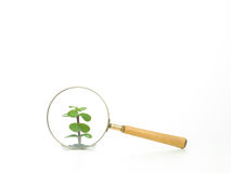 Studying a plant through a magnifying glass Stock Photography