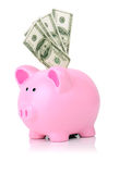 Stuff piggy with 100 bills Stock Images