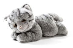 Stuffed animal cat Stock Images