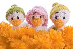 Stuffed animal duck chicks Stock Images