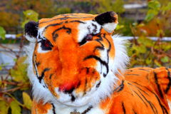 Stuffed animal tiger toy Royalty Free Stock Images